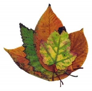 Reflux ősszel